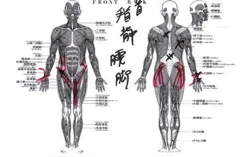 椎間板ヘルニアが再発した本当の原因と治し方