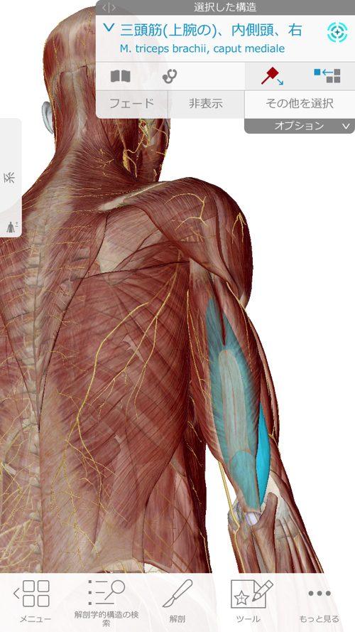 肩が痛い-四十肩・五十肩の原因と治療法-広島で四十肩の治療で有名な整体院の記録2