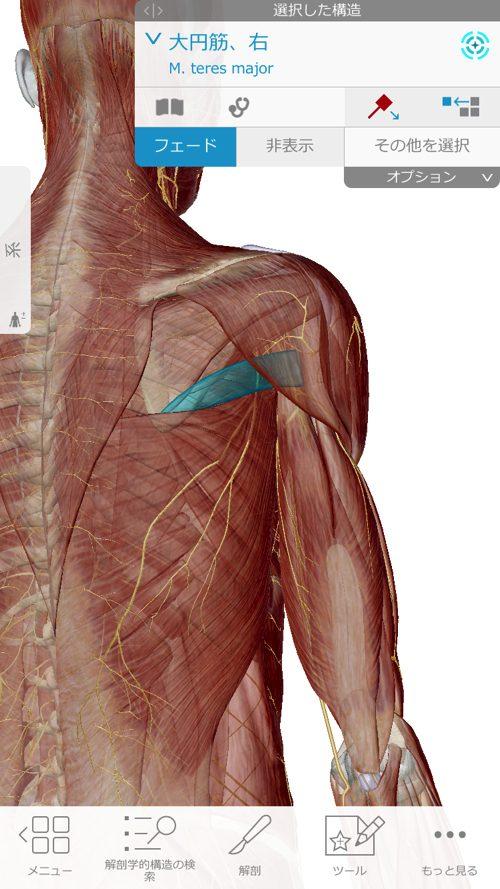 肩が痛い-四十肩・五十肩の原因と治療法-広島で四十肩の治療で有名な整体院の記録3