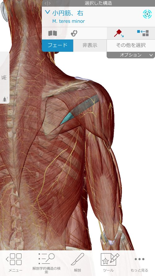 肩が痛い-四十肩・五十肩の原因と治療法-広島で四十肩の治療で有名な整体院の記録4