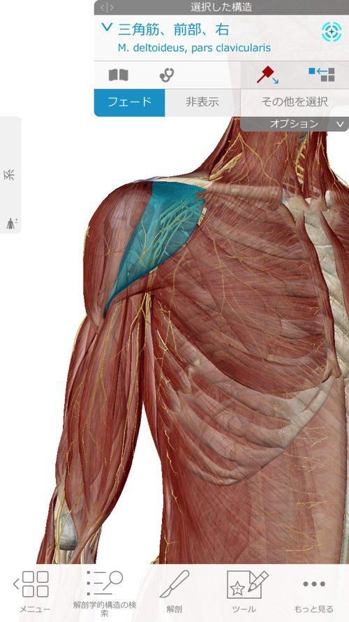 肩が痛い-四十肩・五十肩の原因と治療法-広島で四十肩の治療で有名な整体院の記録5