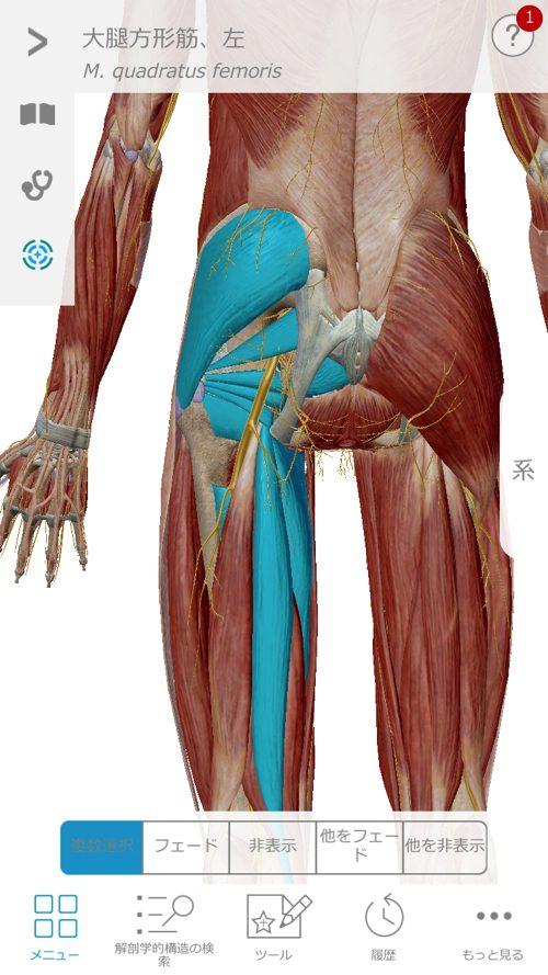 腰痛で歩けない-原因と治療法3