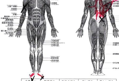 ヘルニアの治療と再発防止は足の指の曲がりを治す事も大切2