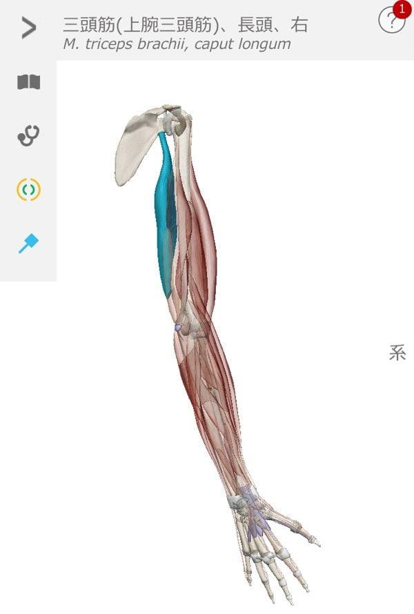 五十肩-腕を上げる際に肩が痛い-治し方11