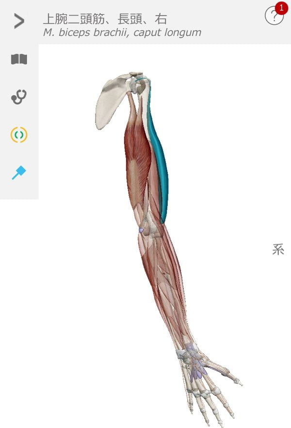 五十肩-腕を上げる際に肩が痛い-治し方12