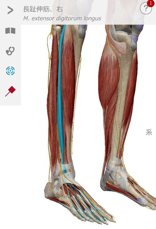 椎間板ヘルニア-腰の痛みと足のシビレを治す整体6