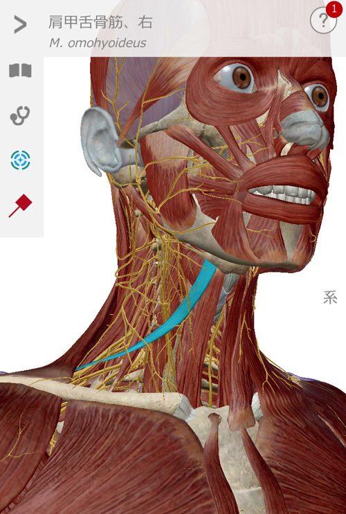 腕や指のシビレと首肩の痛みを治す2