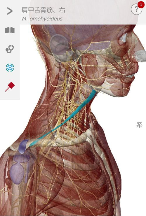 腕や指のシビレと首肩の痛みを治す3
