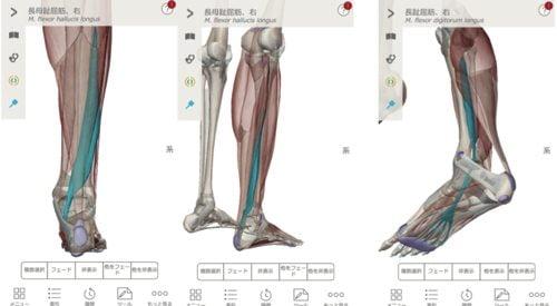 2膝に水がたまり痛い-正座が出来ない-膝の治療方法1
