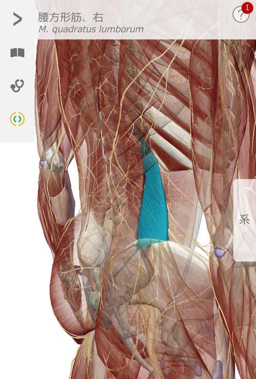 ぎっくり腰をすぐに治す1-出張-ぎっくり腰治療1