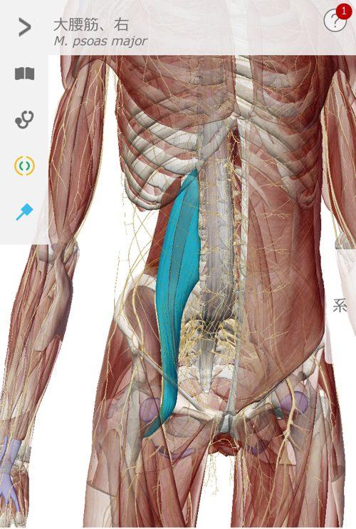 ぎっくり腰をすぐに治す1-出張-ぎっくり腰治療2