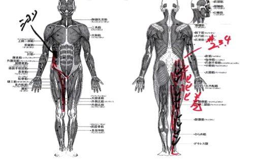 すべり症-腰の痛みと足のシビレの治療法8