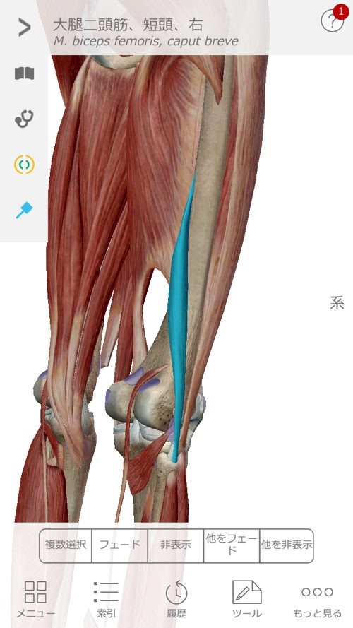 すべり症-腰の痛みと足のシビレの治療1