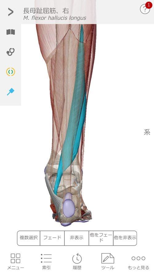 すべり症-腰の痛みと足のシビレの治療2