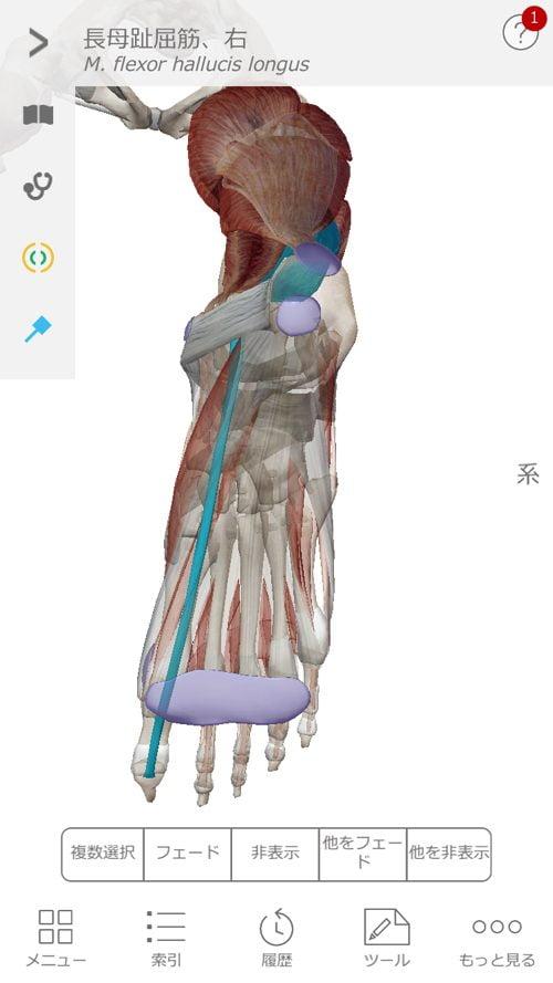 すべり症-腰の痛みと足のシビレの治療3