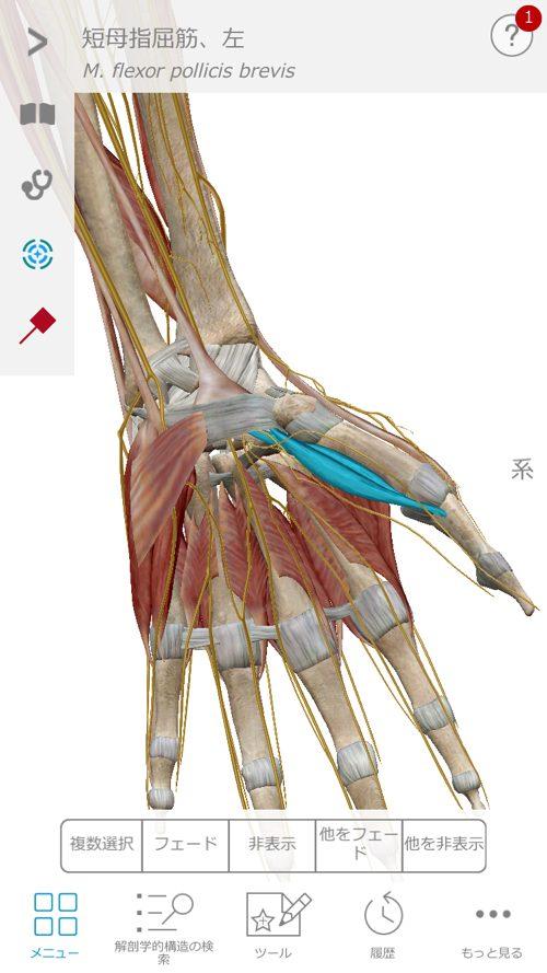 すべり症-腰の痛みと足のシビレの治療a1