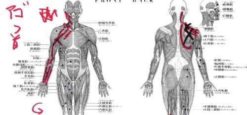 1肩が上に上がらない、腕が回らない四十肩・五十肩等の肩の痛みの原因と治療1