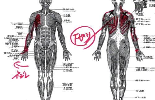 1肩が上に上がらない、腕が回らない四十肩・五十肩等の肩の痛みの原因と治療2