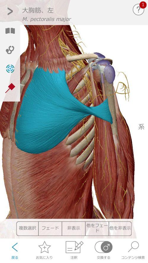 1肩が上に上がらない、腕が回らない四十肩・五十肩等の肩の痛みの原因と治療a11