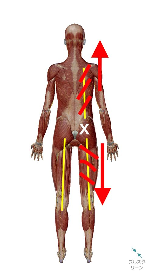 1腰痛-ぎっくり腰の原因と治療方法-広島で有名-腰痛専門整体院1