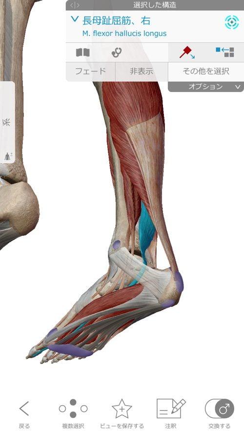 ヘルニアの治療と治し方-腰の痛み-脚の痺れ-膝に力が入らないー歩けない-原因6