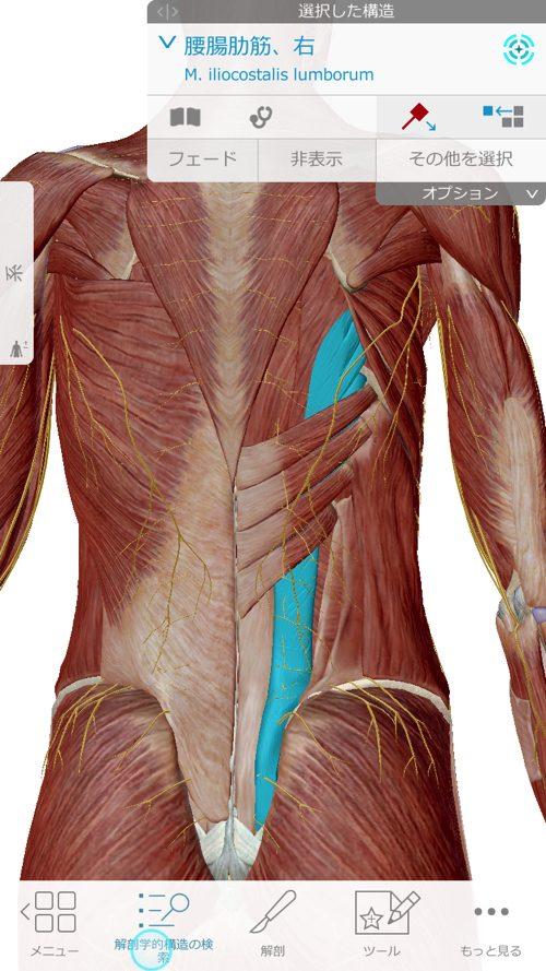咳からくる腰痛の原因と治療方法-広島で腰痛専門の整体院の実例記録3