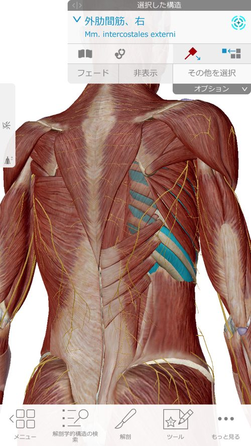 咳からくる腰痛の原因と治療方法-広島で腰痛専門の整体院の実例記録5