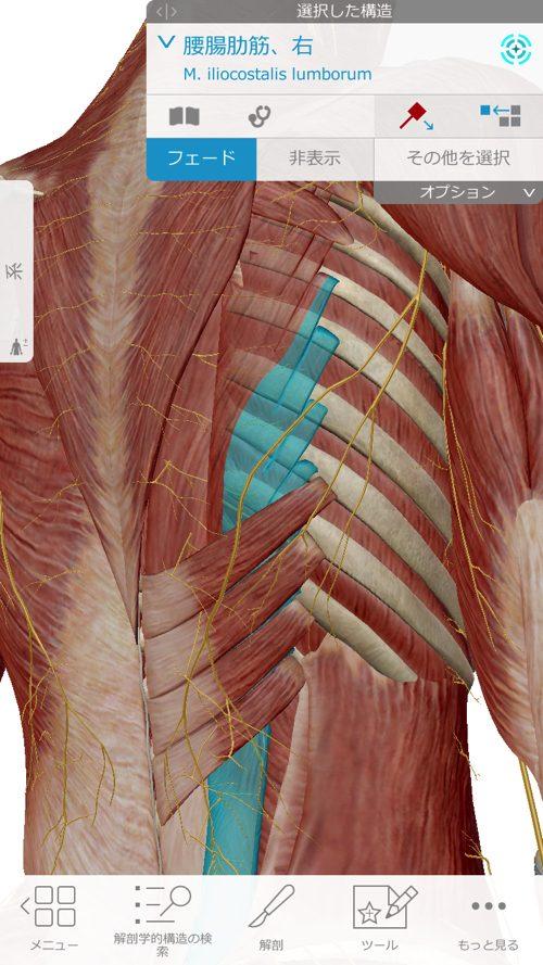 咳からくる腰痛の原因と治療方法-広島で腰痛専門の整体院の実例記録6