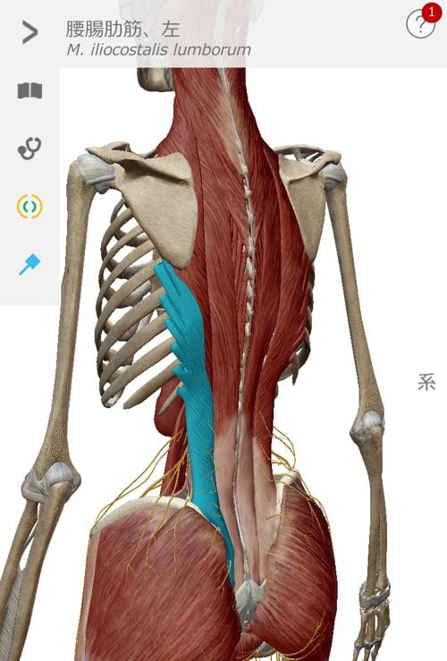 ヘルニアと側弯症で腰が痛く身体が傾く原因と治療方法10