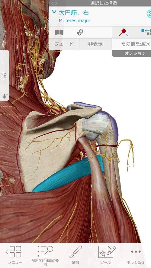 首と肩の痛み・腕の痺れを治す_原因と治療方法