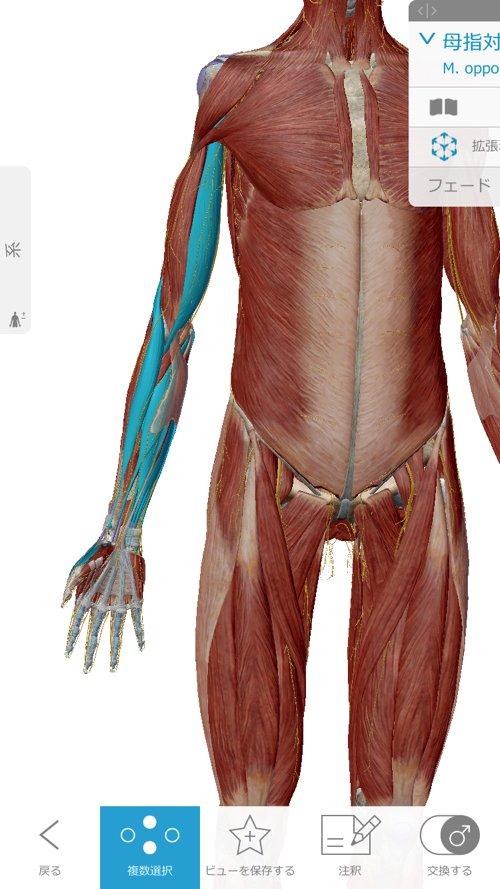 広島-五十肩治療_手根管症候群-肘部管Number症候群-肩関節周辺炎の原因と治療方法