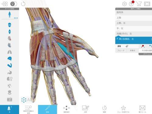 ばね指の原因と治療方法_ばね指の治し方解説_整体広島眞田流の改善例9