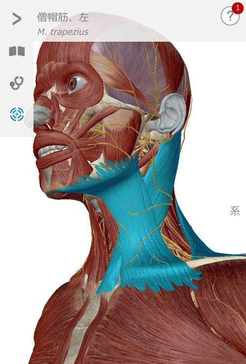 五十肩治療_首の痛み肩の痛みで眠れない症状の治し方10