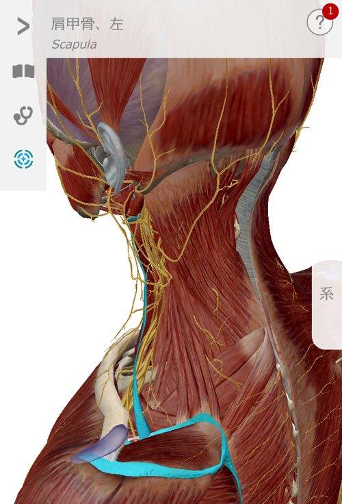五十肩治療_首の痛み肩の痛みで眠れない症状の治し方11