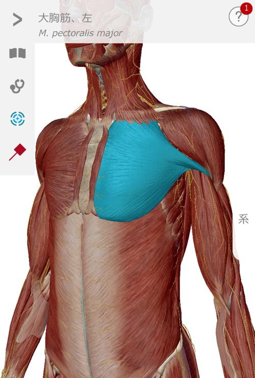 五十肩治療_首の痛み肩の痛みで眠れない症状の治し方9