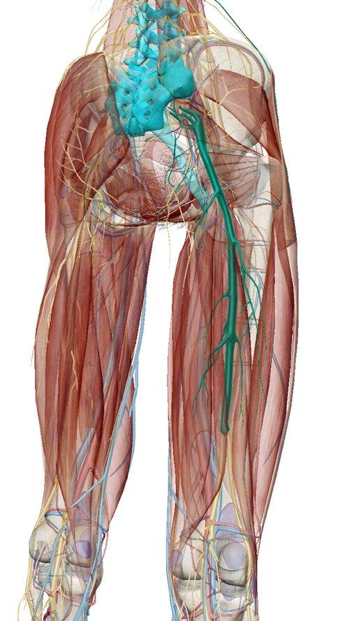 広島で腰痛治療専門の整体院の改善記録2