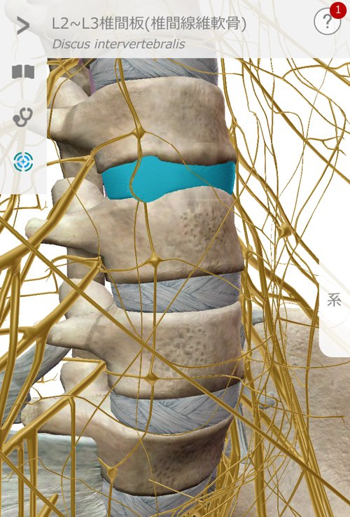 広島_神経ブロック注射が効かないヘルニアの治療10