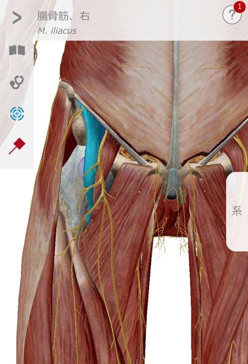 広島_神経ブロック注射が効かないヘルニアの治療15