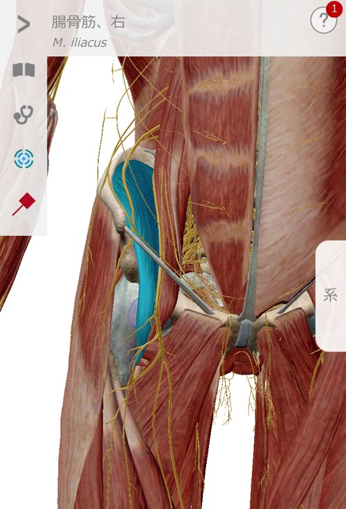 広島_神経ブロック注射が効かないヘルニアの治療16