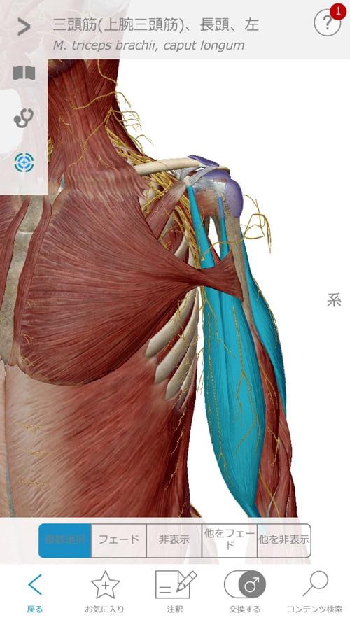 頚椎ヘルニアで指の痺れ原因と治療方法10