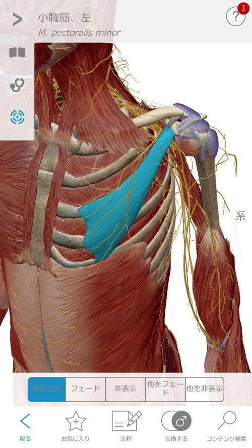 頚椎ヘルニアで指の痺れ原因と治療方法11