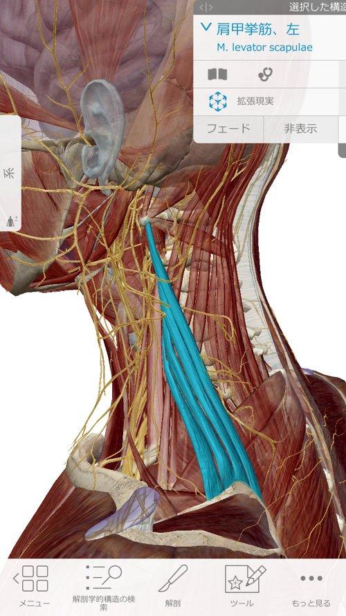頚椎ヘルニアで指の痺れ原因と治療方法5