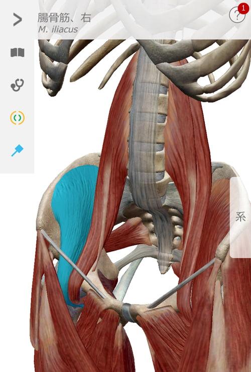 転んだ後足の付根が痛くて歩けなくなったお客様の改善例6
