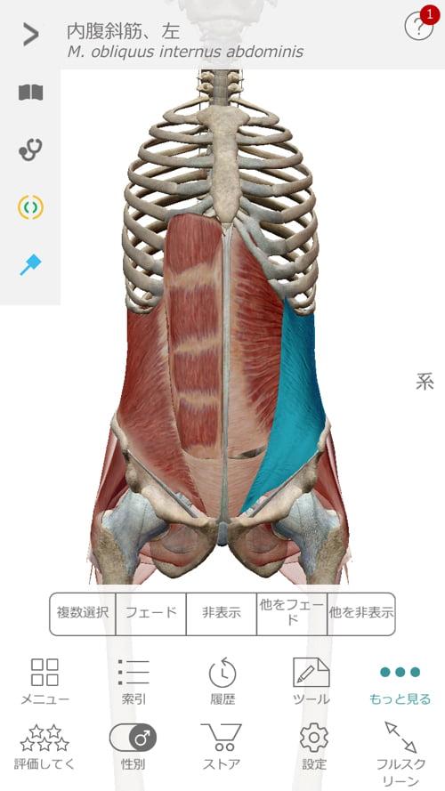 脊椎分離すべり症の腰の痛みの原因と治療方法10