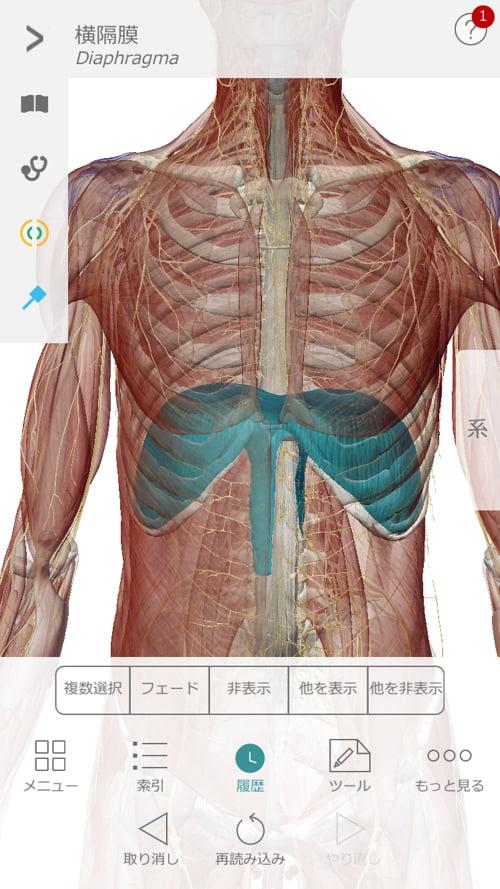 脊椎分離すべり症の腰の痛みの原因と治療方法11