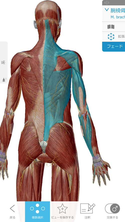 脊椎分離すべり症の腰の痛みの原因と治療方法12