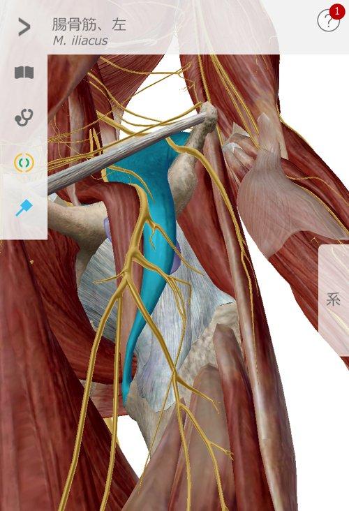 ぎっくり腰_ヘルニアが再発する理由と治療方法