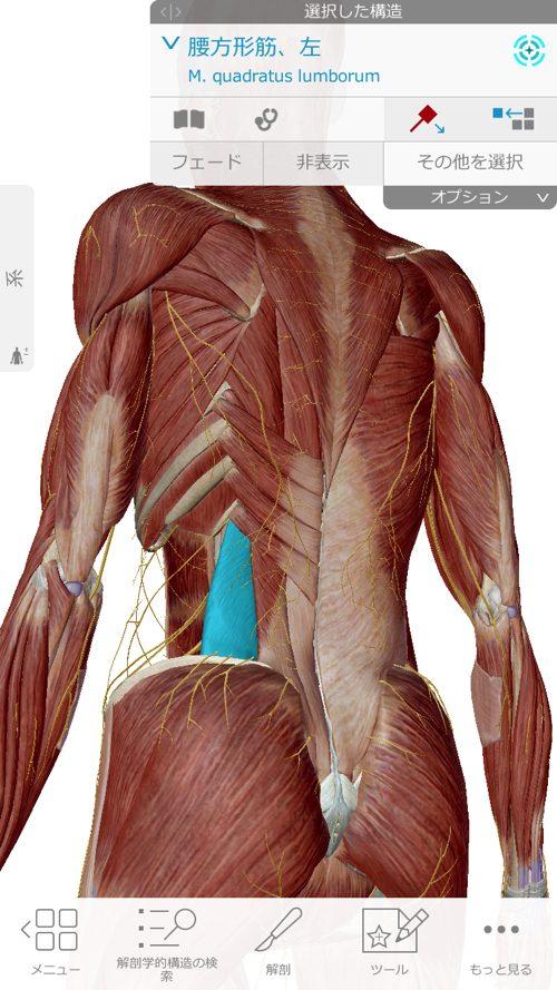 くしゃみで「ぎっくり腰」になった際の治療-広島で腰痛-ぎっくり腰の治療で有名な整体広島眞田流の実例1