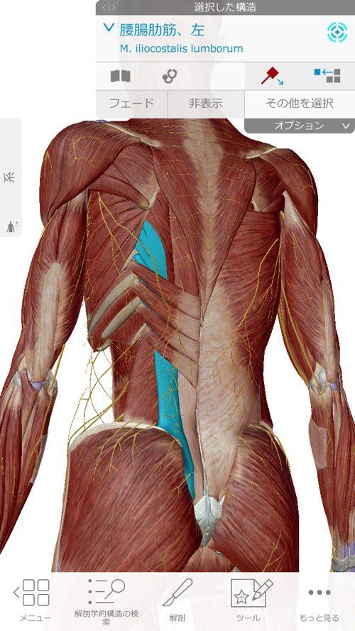 くしゃみで「ぎっくり腰」になった際の治療-広島で腰痛-ぎっくり腰の治療で有名な整体広島眞田流の実例3