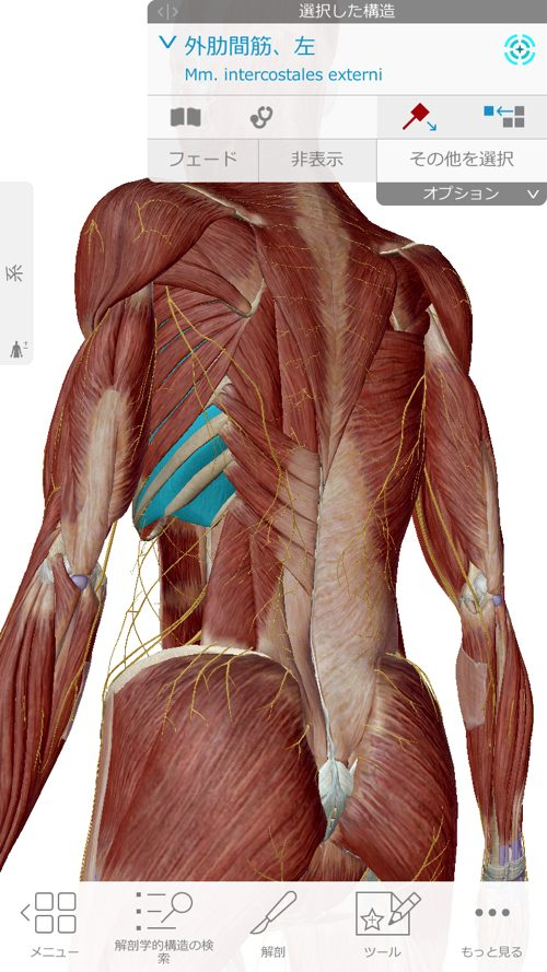 くしゃみで「ぎっくり腰」になった際の治療-広島で腰痛-ぎっくり腰の治療で有名な整体広島眞田流の実例4